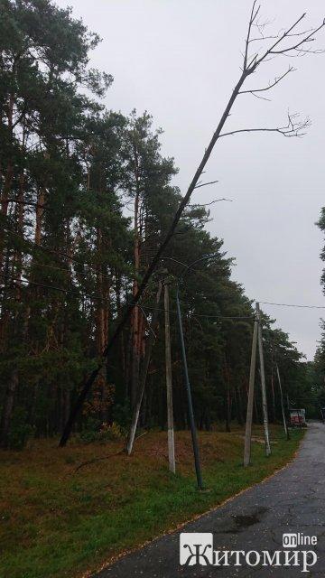 """У житомирському гідропарку ніхто не прибирає аварійне дерево, яке """"висить"""" на дротах декілька днів. ФОТО"""