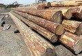 Біля Житомира виявили вантажівку з нелегальною деревиною