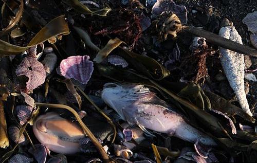 В России на Камчатке берег усеян трупами животных, люди в панике. ФОТО. ВИДЕО