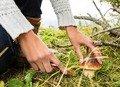 На Житомирщині у лісі загубився 13-річний хлопчик, що збирав гриби з мамою