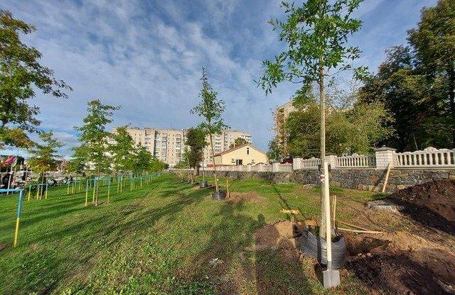 У Житомирі висадили 27 дубів у знак пам'яті про загиблих військових. ФОТО
