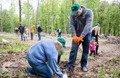 Завтра на Житомирщині висадять 200 тисяч дерев за добу