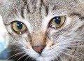 За жовтень на Житомирщині районний суд виніс два вироки за вбивство кішок