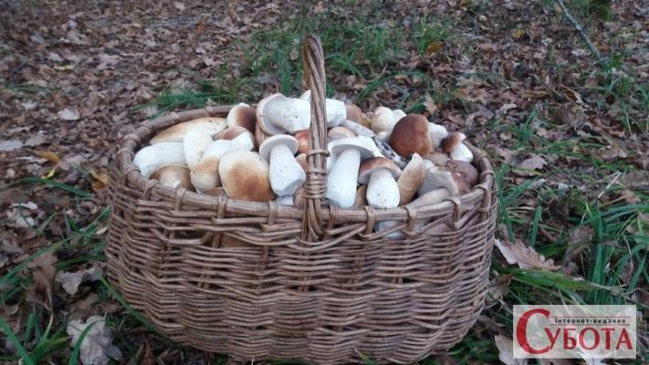 Білі гриби, які знайшов житомирянин Володимир Омецинський