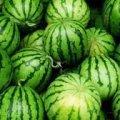 У Житомирі продають «останні» кавуни аж по 9 гривень, але серед них багато нестиглих