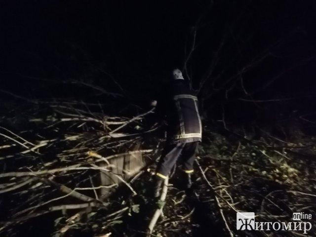 У Житомирі біля будинку для дітей-сиріт впало дерево та перекрило дорогу. ФОТО
