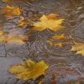 Дощі, грози і сильний вітер: прогноз погоди на три дні