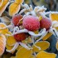 Зниження температури на Житомирщині