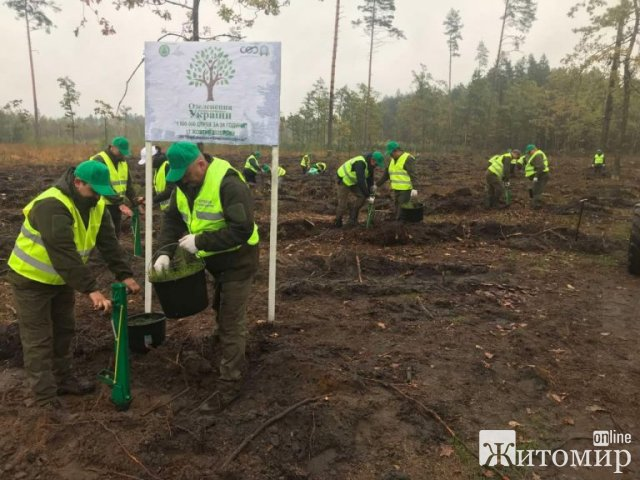 Лісівники Житомирщини вихідними висадили 300 тисяч дерев. ФОТО
