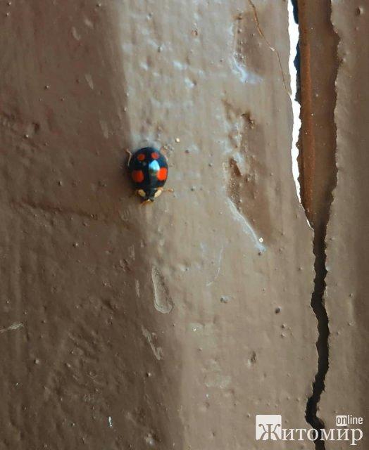 """Нашестя """"сонечок"""": Житомирщину заполонили жуки, які прокинулися від сплячки. ФОТО"""