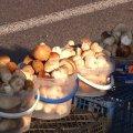 Грибний базар у Високій Печі та перевірка у лабораторії на Житньому ринку в Житомирі. ВІДЕО