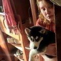 Поліція Житомира розпочала розслідування жорстокого поводження з собакою