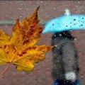Дощі у трьох областях та до +19 тепла: прогноз погоди на 29 жовтня