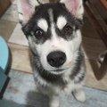 """У Житомирі - сотні охочих взяти до себе пса, якого намагалась """"викинути"""" з вікна жінка"""
