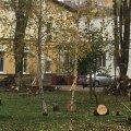 Хто і навіщо вирізав у центрі Житомира півтора десятка здорових дерев? ФОТО