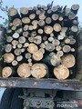 На Житомирщині виявили вантажівку з нелегальною деревиною