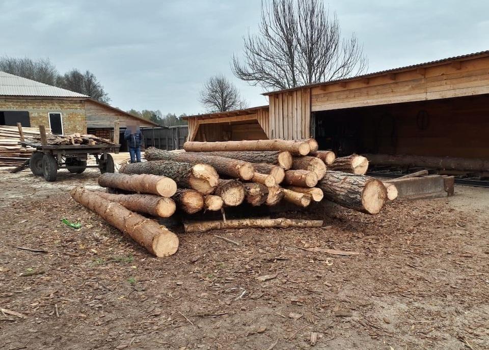 На Житомирщині викрили значну кількість немаркованих дубових і соснових колод
