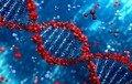 Стійкий імунітет до COVID виробляється лише в частини перехворілих - вчені