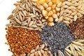 На Житомирщині майже на 400 тис. тонн зменшився врожай зернових