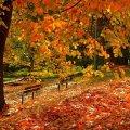 Прогноз погоди на 9 листопада у Житомирі та області