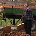 """Житомирський """"Зеленбуд"""" щорічно переробляє від 30 до 50 тонн опалого листя. ВІДЕО"""
