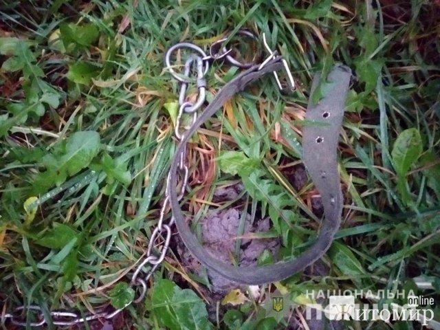 У Новограді-Волинському 18-річний хлопець викрав у знайомої лабрадора, аби подарувати дівчині. ФОТО