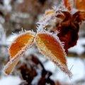 Прогноз погоди на 23 листопада у Житомирі та області