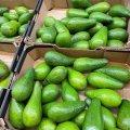 Почому сьогодні авокадо у житомирських гастрономах? ФОТО