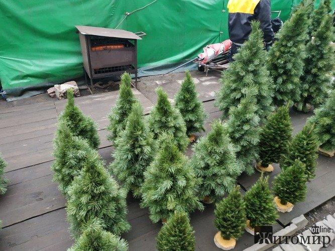 Скільки коштують новорічні ялинки на Житньому ринку? ФОТО