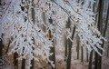 Які свята 18 грудня 2020: традиції, іменини, заборони