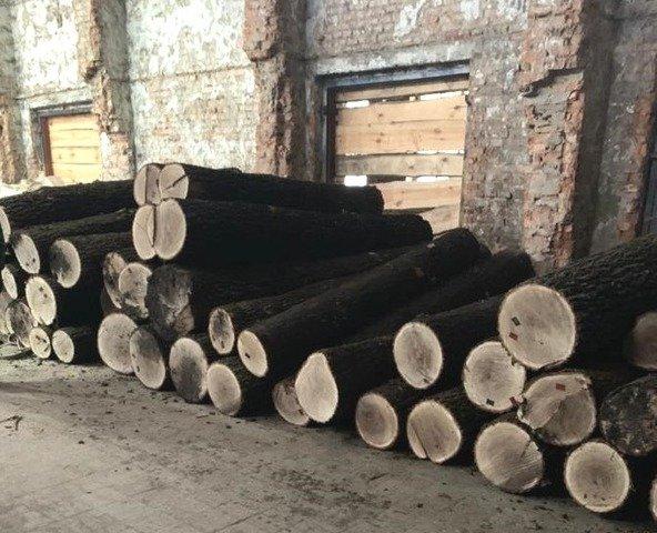 На Житомирщині викрили злочинну групу, яка займалася незаконними порубками та нелегальним експортом деревини. ФОТО