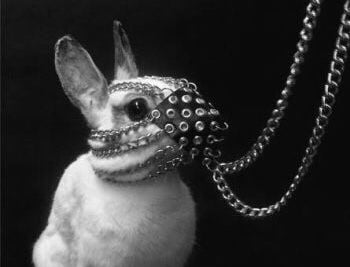 Пусть поскорее закончится этот год Лабораторного Кролика