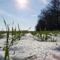 В Україну йде потепління: яким областям пощастить