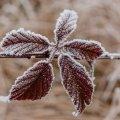 Прогноз погоди на найближчі дні в Житомирі