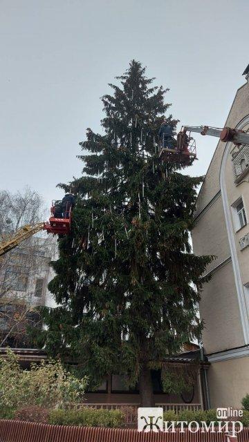 На Михайлівській у Житомирі почали прикрашати ялинку. ФОТО