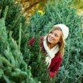 Де у Житомирі продаватимуть новорічні дерева. Адреси