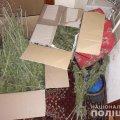 У жителя Коростишева поліцейські вилучили наркотиків на 70 тис. грн. ФОТО
