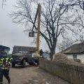 У селі Ружинського району рятувальники зрізали дерево, яке могло впасти на будинок. ФОТО