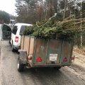 Біля Житомира поліцейські зупинили автомобіль з нелегальними ялинками. ФОТО