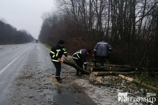 На Житомирщині рятувальники прибирали з дороги повалені вітром дерева. ФОТО