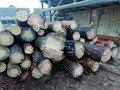 На Житомирщині поліцейські викрили два випадки незаконних оборудок з лісом. ФОТО