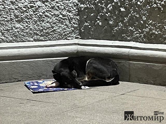 Хто щасливо спить під житомирською міськрадою? ФОТО