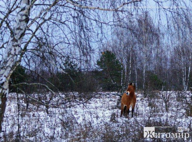 В Чорнобилі виявили тварин, які не бояться морозів: їх краса вражає