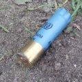 У селищі на Житомирщині невідомі застрелили чотирьох собак. ВІДЕО