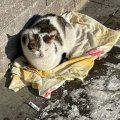 Житомиряни рятують від лютих морозів вуличних тварин. ФОТО