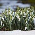 Украину ждет аномальная весна: синоптик ошарашил прогнозом