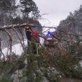 На автодорозі в Житомирській області впало дерево та перекрило рух транспортним засобам. ФОТО