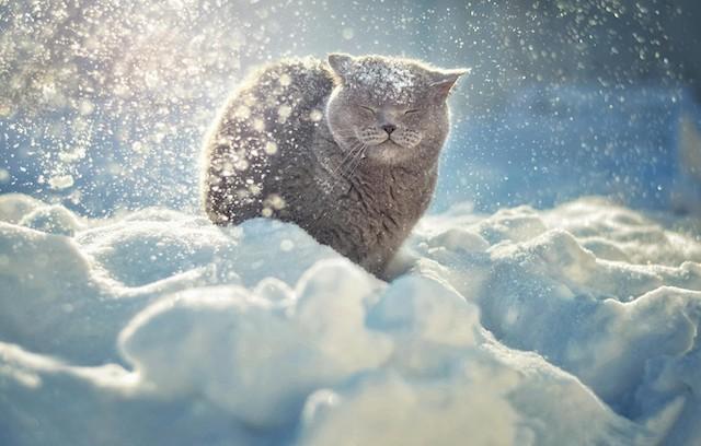 Снегопады и метель окутают всю Житомирскую область