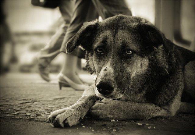 У Чуднівському районі поліція покриває вбивцю тварин?
