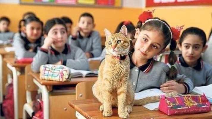Удивительная история уже второй год продолжается в турецком городе Измир